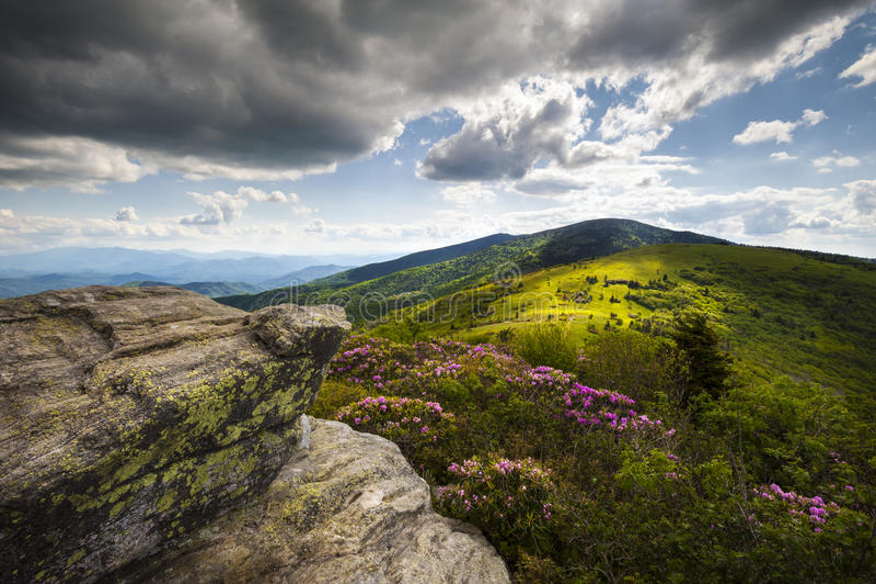 A mola apalaches da montanha Roan floresce o NC imagem de stock