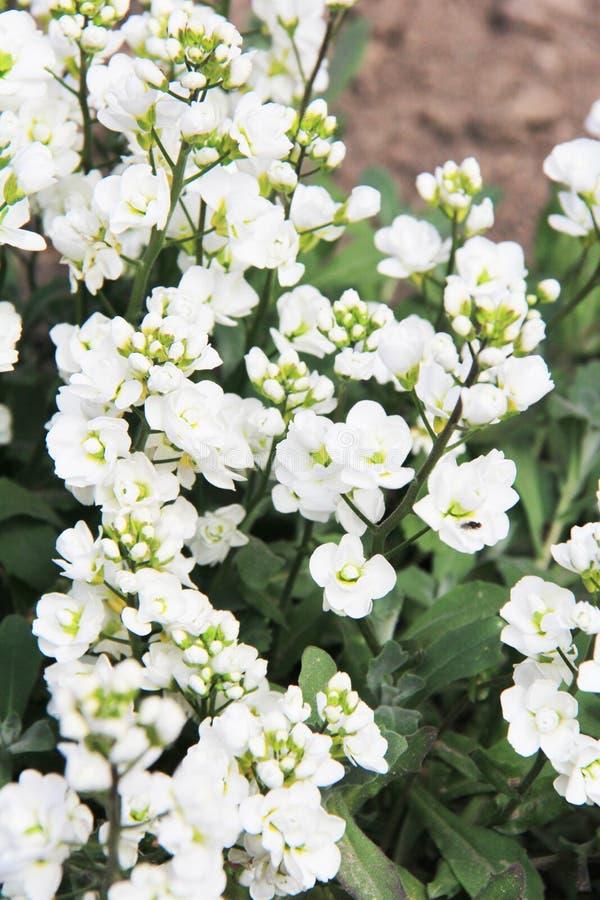 Mola bonita da flor do sol da planta da foto do ver?o fotografia de stock royalty free