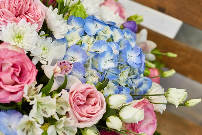 A mola bonita floresce em brandamente cor-de-rosa e claro - cores azuis fotografia de stock royalty free