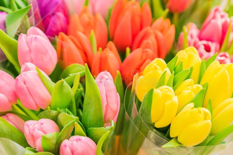 A mola bonita floresce, ideia de muitos grupos coloridos das tulipas foto de stock
