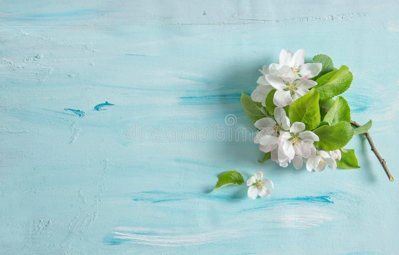 A mola da flor da árvore de Apple floresce o fundo azul da aquarela foto de stock royalty free