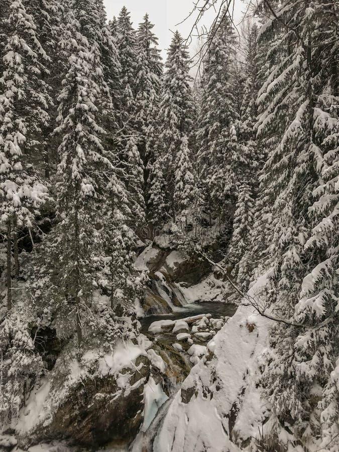 A mola do inverno alimentou cachoeiras da angra no inverno, Tatry, Polônia imagens de stock