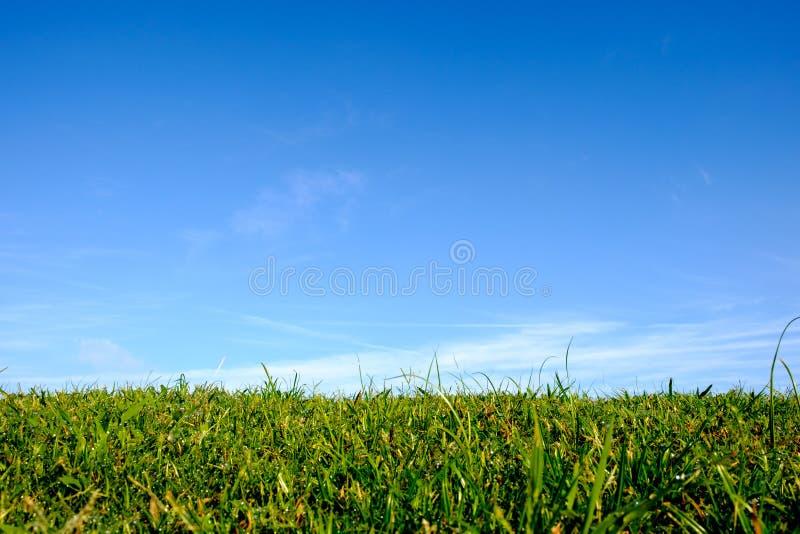 Mola e close up frescos, molhados, verdes da grama do verão com nuvens claras e o céu azul foto de stock royalty free