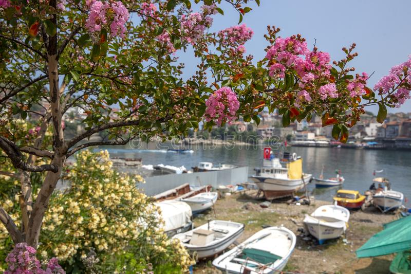 Mola em Amasra e em flores de floresc?ncia novas coloridas fotografia de stock