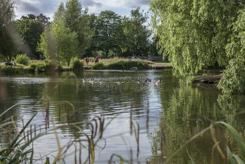 Mola em Londres; uma lagoa e umas hortaliças em torno delas foto de stock
