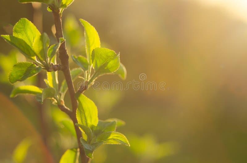 A mola está aqui Os raios brilhantes do sol de ajuste no fundo do primeiro borrado esverdeiam com produtos manufaturados brilhant imagem de stock royalty free