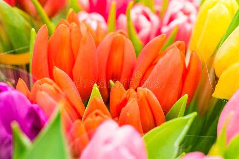 A mola fresca bonita floresce, grupos coloridos das tulipas imagens de stock