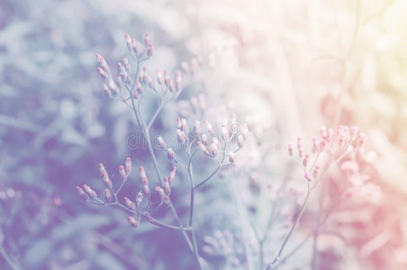 Mola macia da flor da grama do foco, cor pastel do fundo da natureza do verão fotos de stock royalty free
