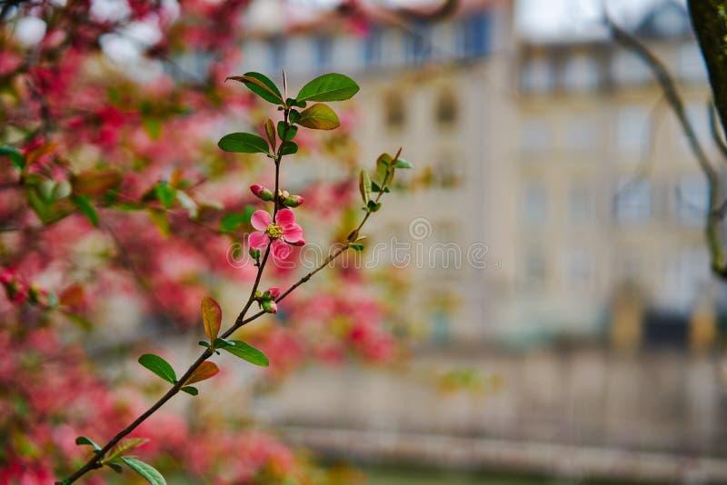 Mola na árvore de florescência da cidade imagens de stock royalty free
