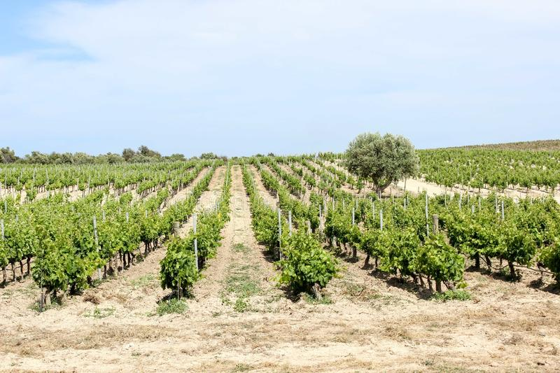 Mola no vinhedo, Sicília imagem de stock