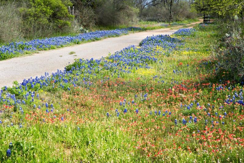 Mola Texas Wildflowers fotos de stock