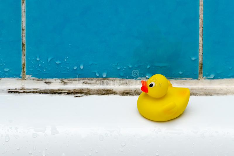 Mold in bath, a duck toy, bathroom stock images