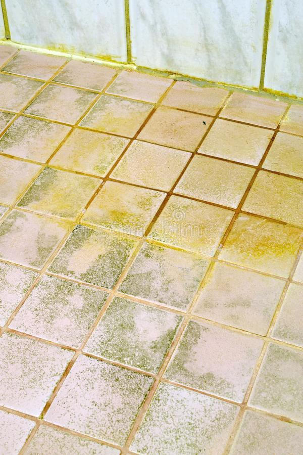 Mold On The Bathroom Tile Floor Stock Image Image Of Housework - Bathroom tile mold