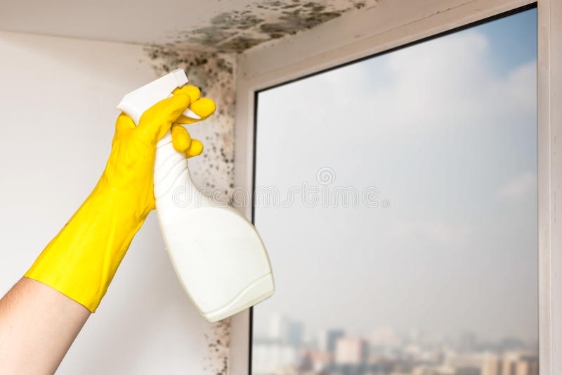 Mold in the corner of the window. royalty free stock images
