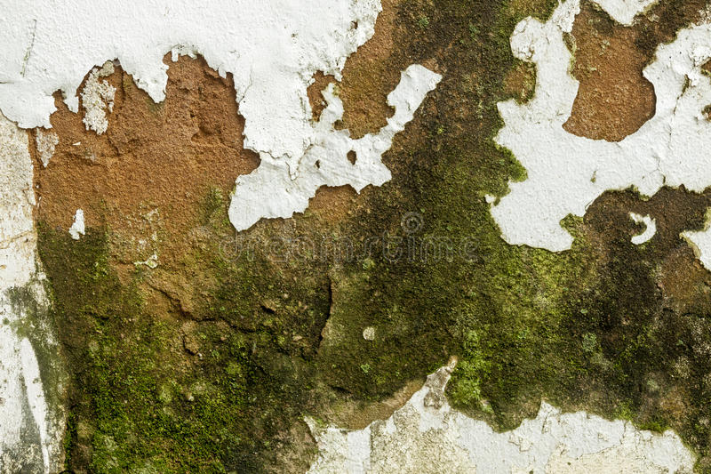 Mold Fungus Peeling Flaking Paint Due to Rising Damp royalty free stock photos