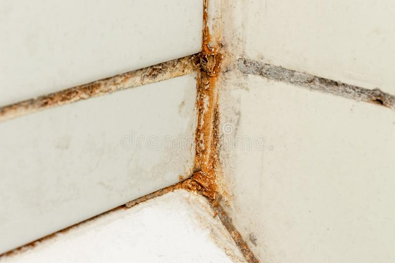 Mold fungus and rust growing in tile joints in damp poorly ventilated bathroom with high humidity, wtness, moisture and dampness stock images