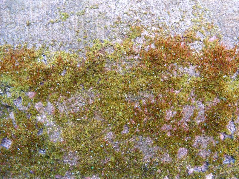 Mold growing on cement stock image