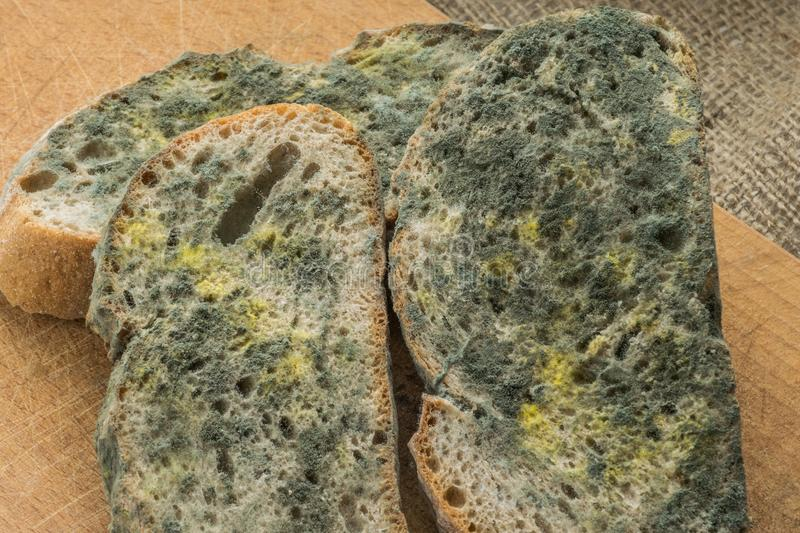 Mold growing rapidly on moldy bread in green and white spores. stock photo
