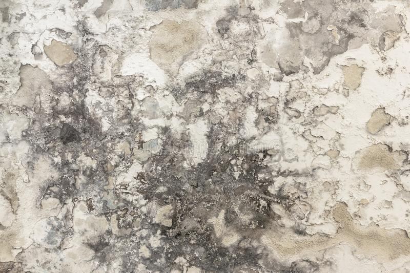 Mold and moisture buildup on a wall royalty free stock photography