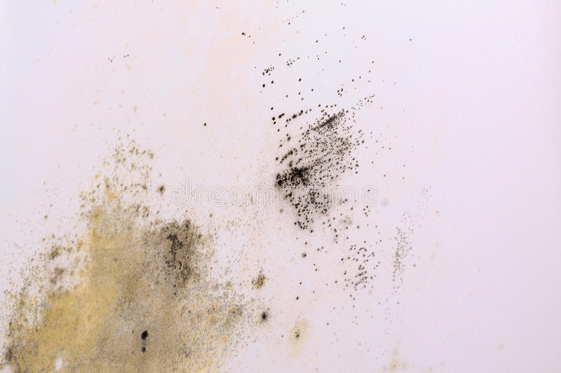 Mold problem in home. royalty free stock photos