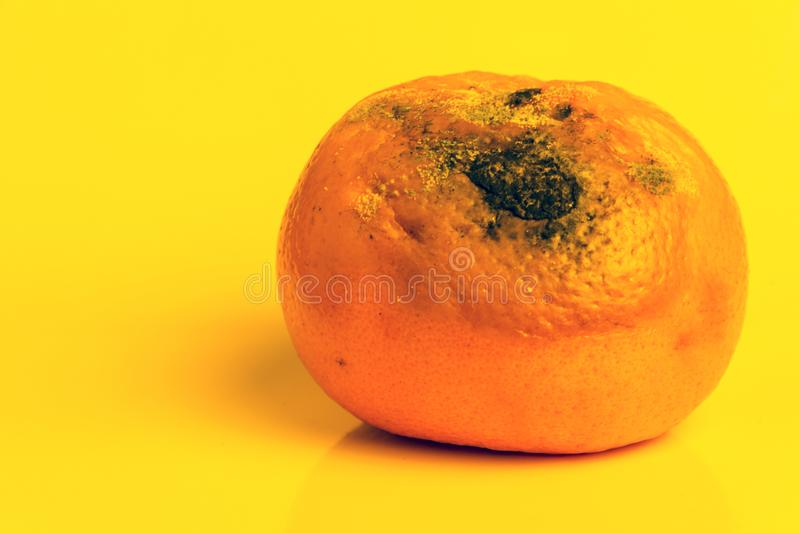 Mold on a ripe orange mandarin. Spoiled Citrus Fruit is on a yellow background. Copy space. Close-up. stock images