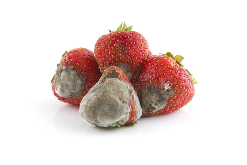 Mold Strawberry royalty free stock image
