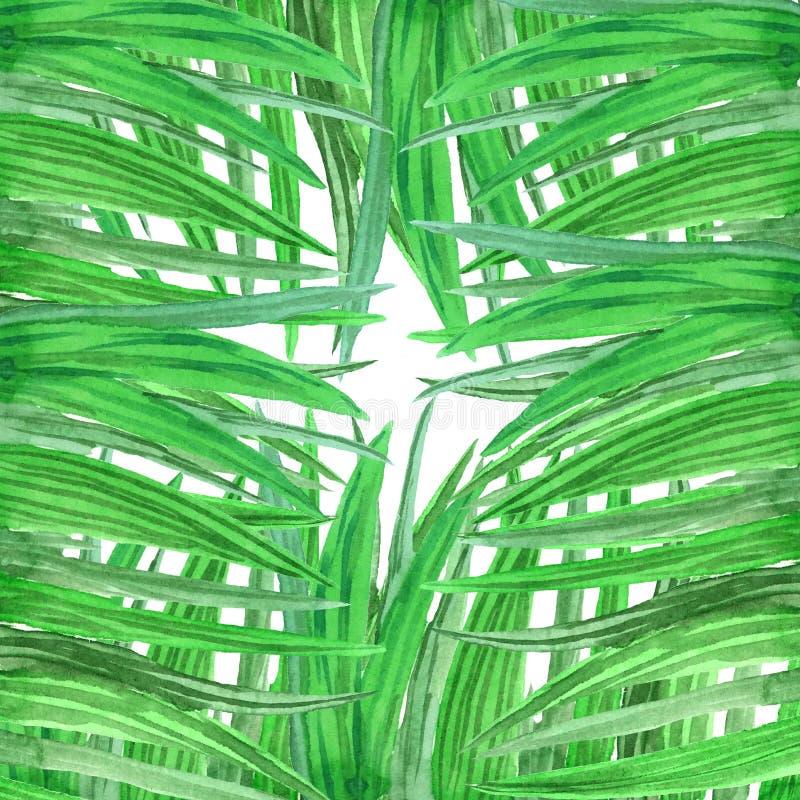 Moldação do fundo da aquarela da grama verde fresca ilustração do vetor