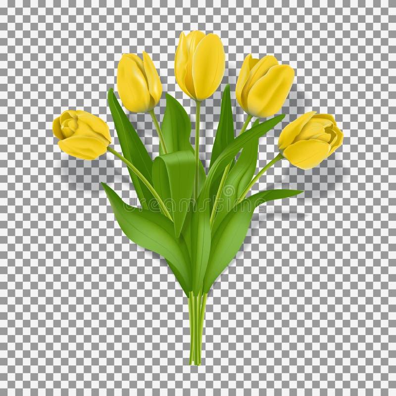 Molde amarelo das flores da tulipa da mola ilustração stock