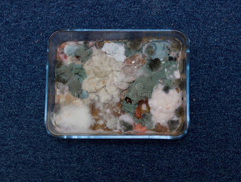 Molde crescido no alimento no prato de vidro retangular - imagem foto de stock royalty free