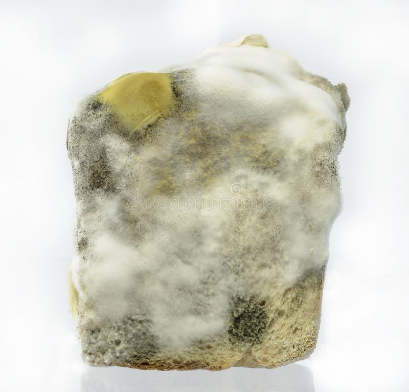Molde de pão imagem de stock royalty free
