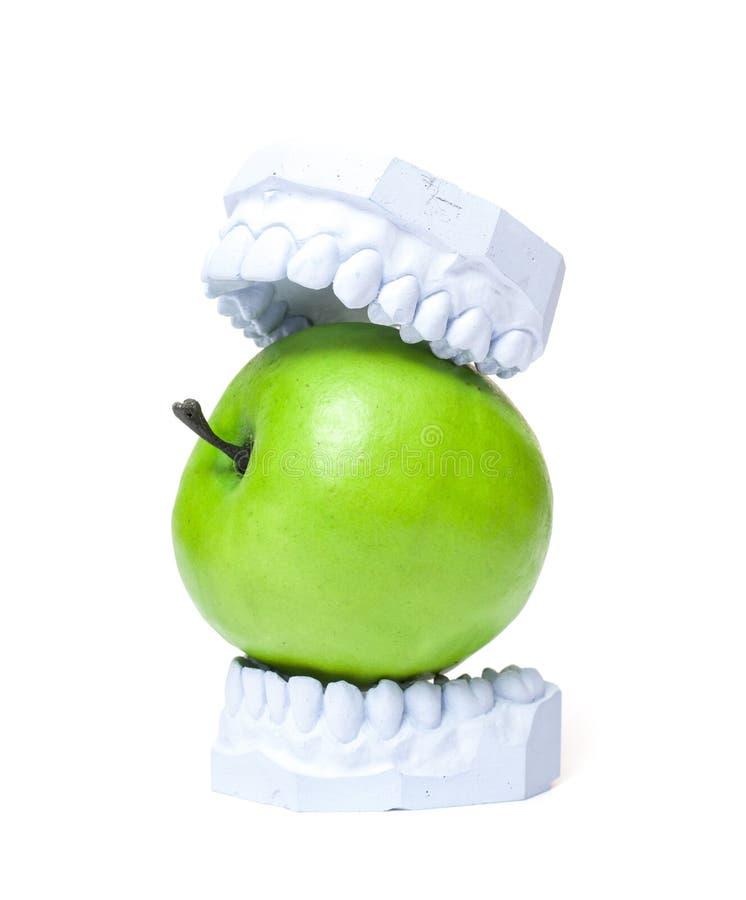 Molde de yeso de dientes con la manzana verde fotografía de archivo libre de regalías