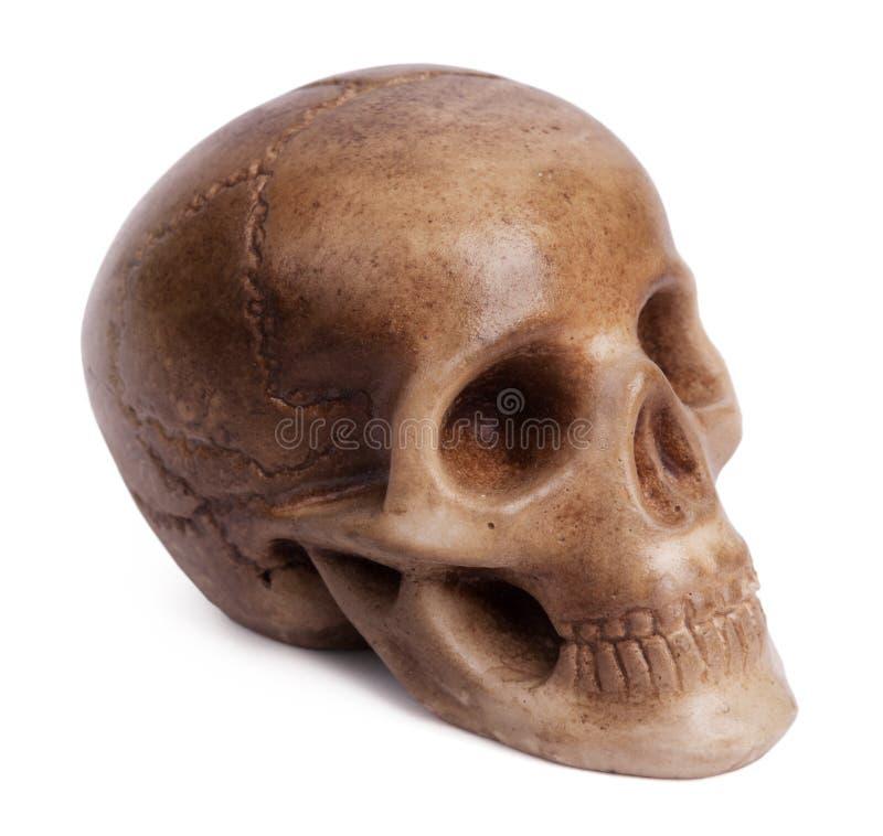 Molde De Yeso De Un Cráneo Humano Imagen de archivo - Imagen de ...