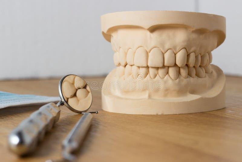 Molde dental con las herramientas dentales foto de archivo libre de regalías
