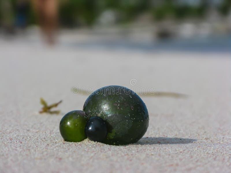 Molde desconocido verde extraño del objeto en tierra por el océano fotografía de archivo libre de regalías