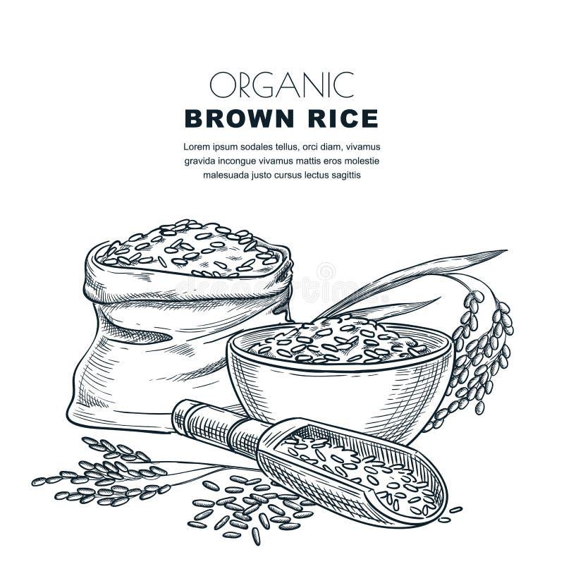 Molde do projeto da etiqueta do arroz Esboce a ilustração do vetor das orelhas do cereal, da bacia, da colher de madeira e do sac ilustração royalty free