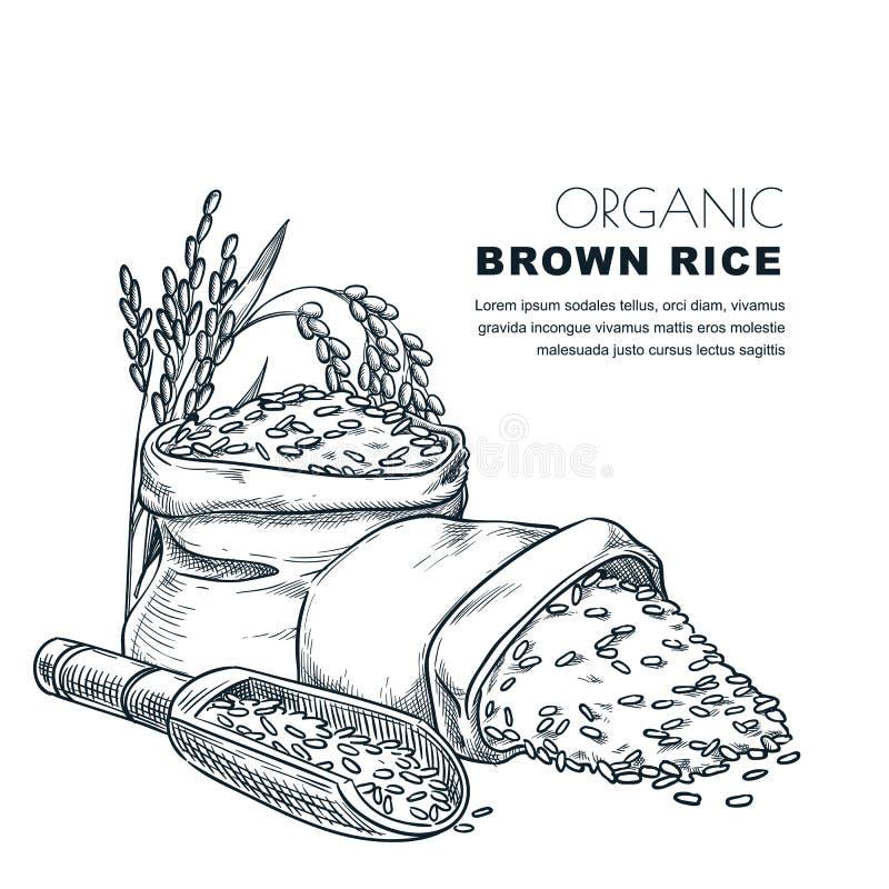 Molde do projeto da etiqueta do arroz Esboce a ilustração do vetor das orelhas do cereal, da colher de madeira e do saco Fundo do ilustração stock