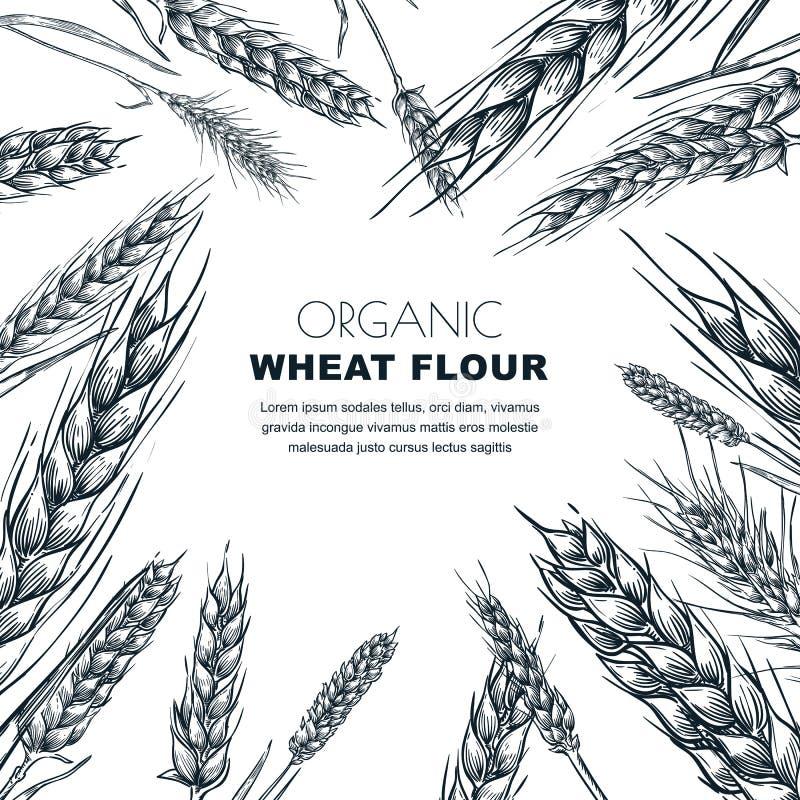 Molde do projeto da etiqueta da farinha de trigo Ilustração do vetor do esboço das orelhas do cereal Fundo do pacote da padaria ilustração stock