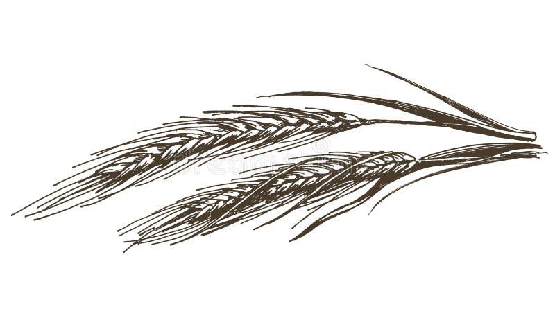 Molde do projeto do logotipo do vetor do trigo alimento ou grão ilustração do vetor