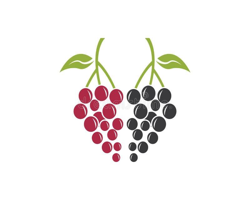 Molde do vetor do logotipo do fruto da uva ilustração royalty free