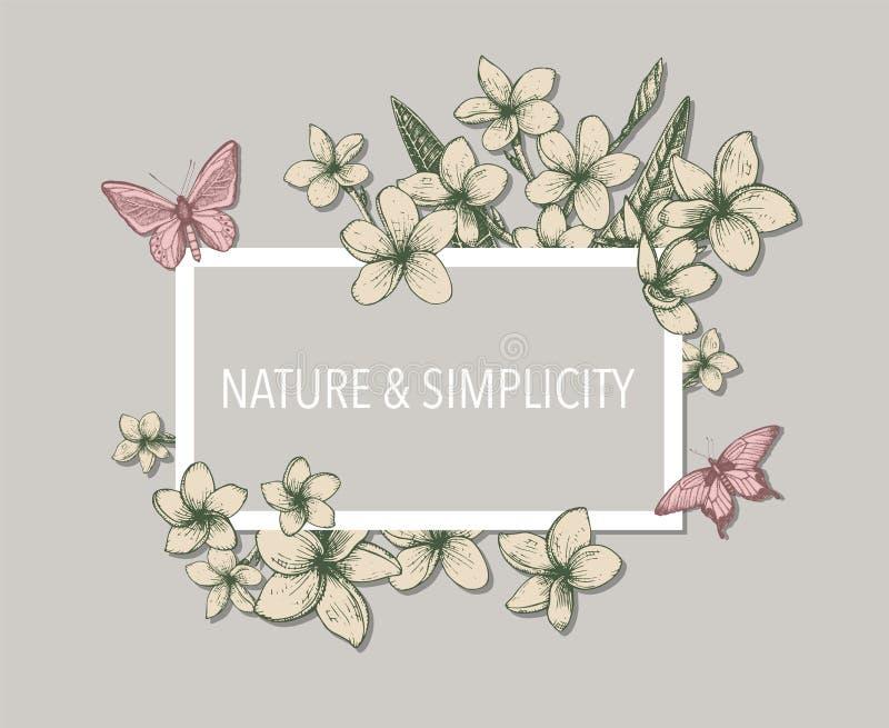 Molde floral tropical com grupos, as flores e as folhas tirados mão do plumeria e das borboletas Aperfeiçoe para o projeto românt ilustração do vetor