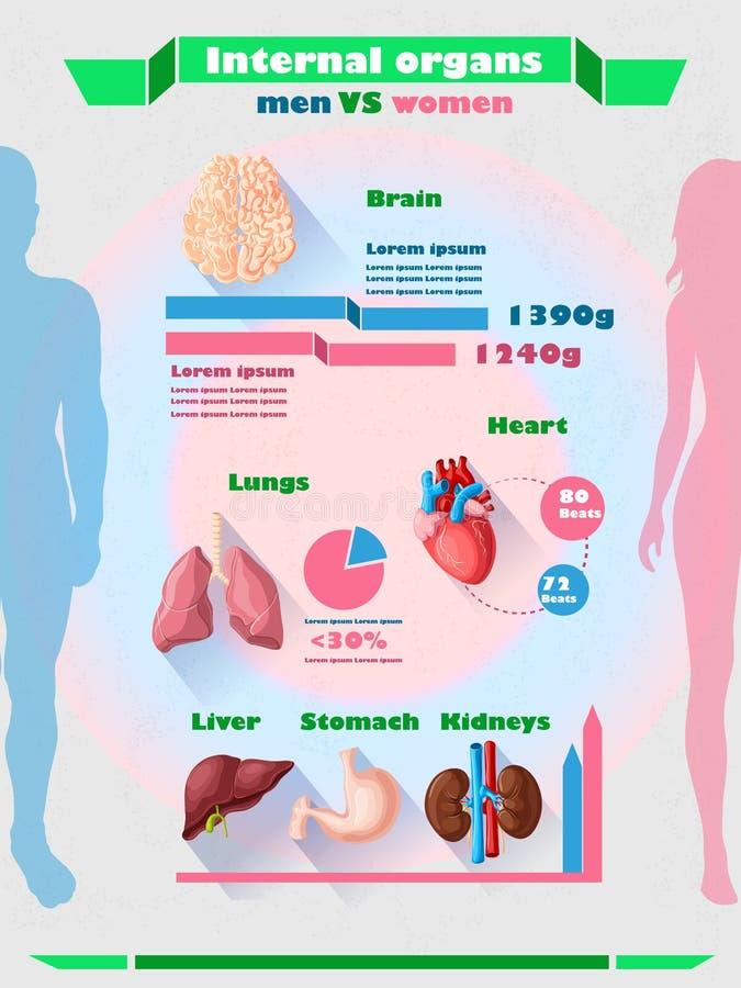 Molde humano de Infographic dos órgãos internos ilustração royalty free