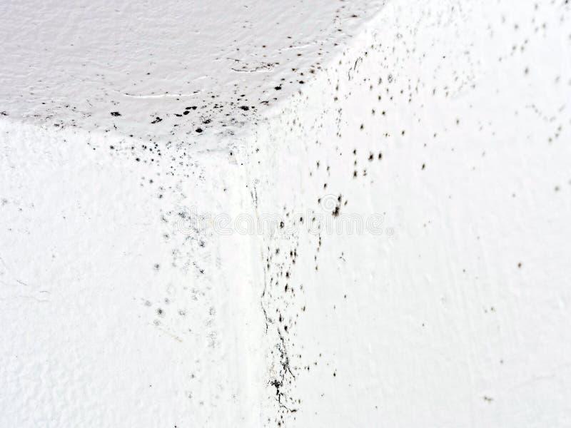 Molde insalubre, molde na casa, condensação detalhe imagem de stock royalty free