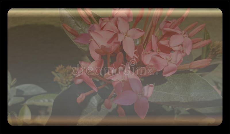 Molde maçante do fundo da natureza do sumário para o Web site, projeto abstrato do molde dos gráficos da informação ilustração royalty free