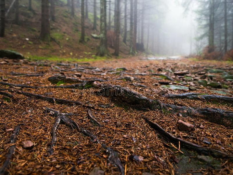 Molde na Floresta Negra da névoa imagens de stock royalty free