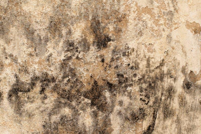 Molde na parede