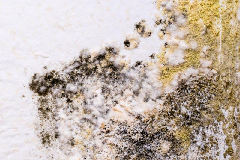 Molde negro en whitewall Macro del primer imagen de archivo libre de regalías