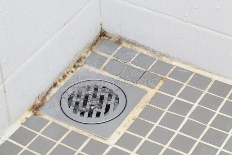 Molde no banheiro foto de stock royalty free