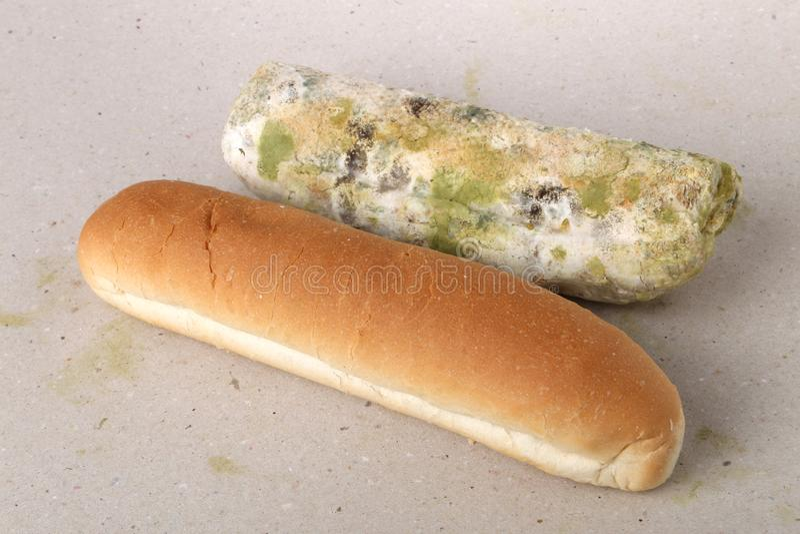 Molde no pão O melhor antes da data tem expirado há muito tempo com este alimento mofado Espaço para o texto fotos de stock