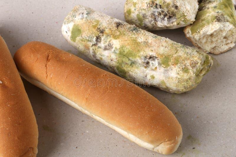 Molde no pão O melhor antes da data tem expirado há muito tempo com este alimento mofado Espaço para o texto foto de stock royalty free