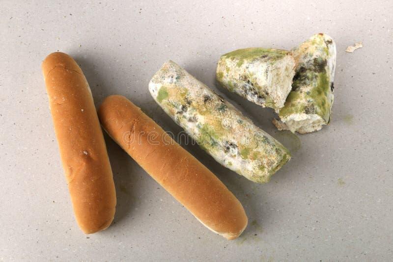 Molde no pão O melhor antes da data tem expirado há muito tempo com este alimento mofado Espaço para o texto fotografia de stock